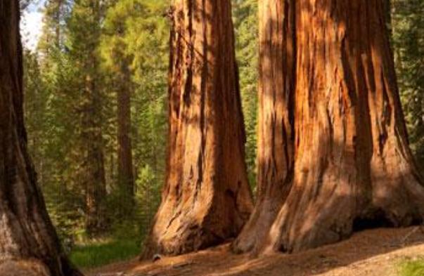 Sequoia Economic Infrastructure-SEQI