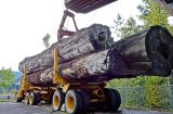 Phaunos Timber rejects Stafford's Offer 1